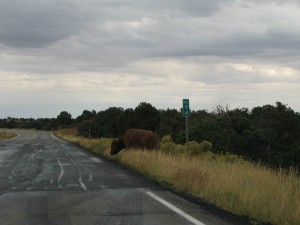 Kuh auf der Straße